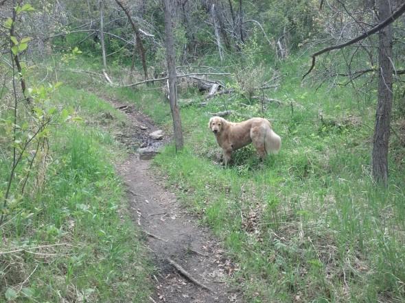 Midas trail 5.23.13